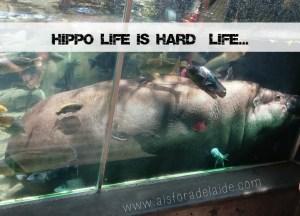 #Aisforadelaide #travel #hippolife #sandiego #sandiegozoo #zoo #california