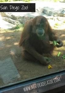 #aisforadelaide #travel #california #sandiego #sandiegozoo #zoo