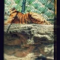 Our San Diego Zoo Trip in Photos! #travel