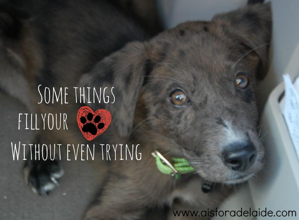 Our adoption story. #pets #PedigreeGives #ad #collectivebias