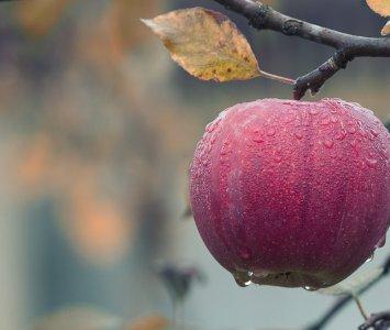 福壽山農場10月觀光季採蘋果旅遊,梨山賓館同步推秋季住房優惠