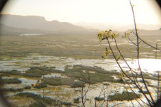 View of the wetland at Palo Verde