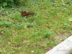 Fauna-Schonbrunn_0018