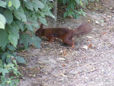 Fauna-Schonbrunn_0020