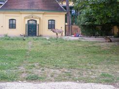 Fauna-Schonbrunn_0121