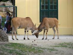 Fauna-Schonbrunn_0125
