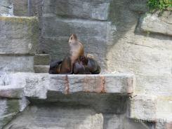 Fauna-Schonbrunn_0127