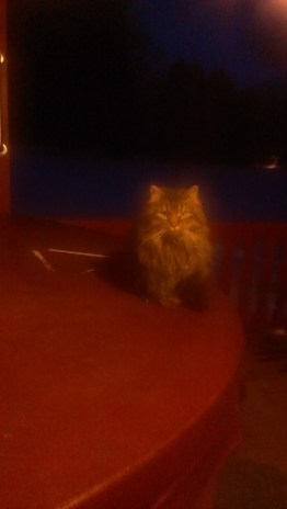 Forest Ridge Campgroundsa and Cabins | Allegheny Cabin - Oliver the cat!