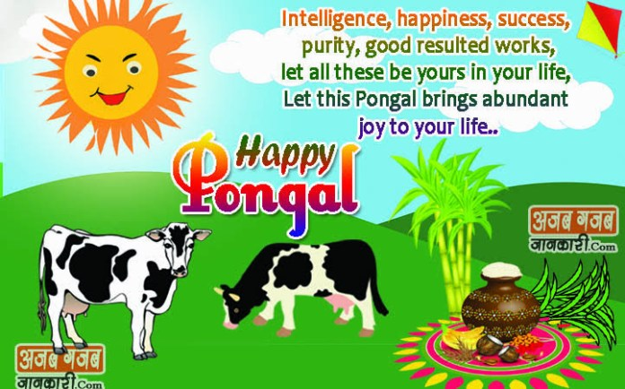 pongal wishes quotes in english