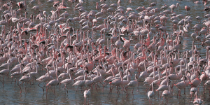 flamingoes lots lake manyara tanzania private safari