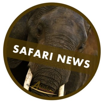 Safari news updates from Ajabu Adventures Tanzania