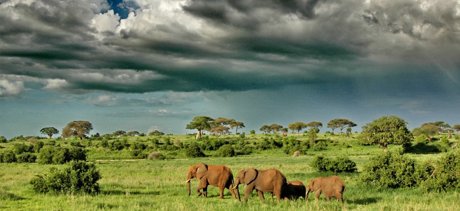 Elephants under dramatic clouds in Tarangire National Park
