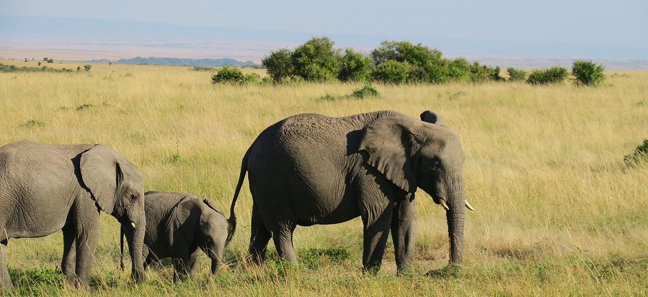 Family elephants in Tanzania support conservation with your safari