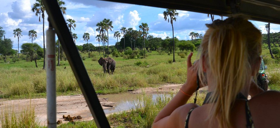 Spotting elephant from your private safari vehicle in Tarangire National Parkpark