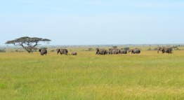 serengeti view nature wildlife tanzania private safaris