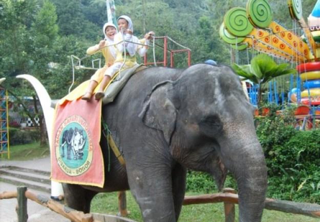 Gajah memiliki berbagai macam indera yang tajam