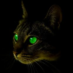 Penglihatan malam kucing sangat kuat