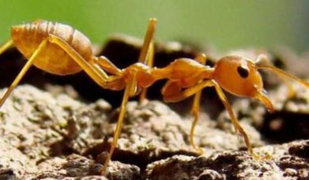 Kehebatan Nabi Sulaiman Yang Bisa Mengerti Bahasa Semut