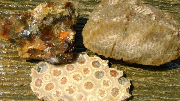 Batu Akik Sarang Tawon