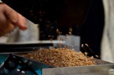 DSC 6192 1 - BAİBÜ, Tohum ve Gıda Güvenliğini Artıracak Yenilikçi Projesini Tanıttı