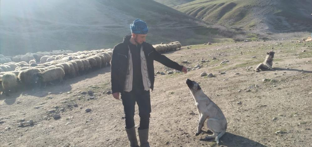 Köpeğini bulup getirene 20 bin lira ödül verecek