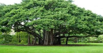 Dikilen Ağaçlar gelişmenin mühürü olsun mu !