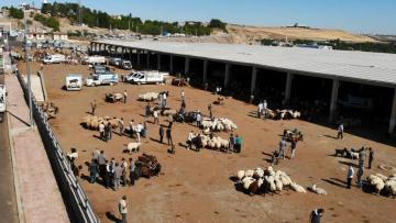 Diyarbakır Hayvan Borsasında beklenen hareketlilik yaşanmıyor