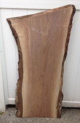 Black Walnut 04
