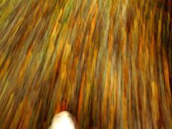 WALK INTO AUTUMN© Annie Japaud 2013