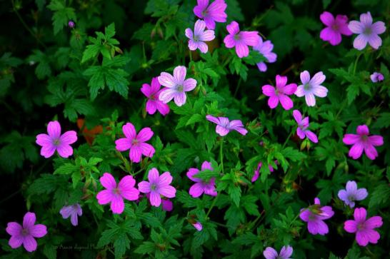 flowers © Annie Japaud Photography