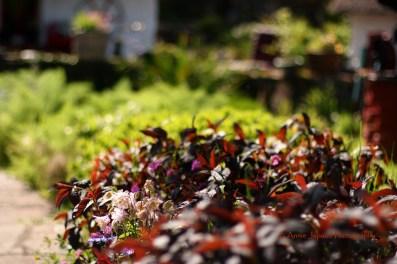 flower beds in the garden