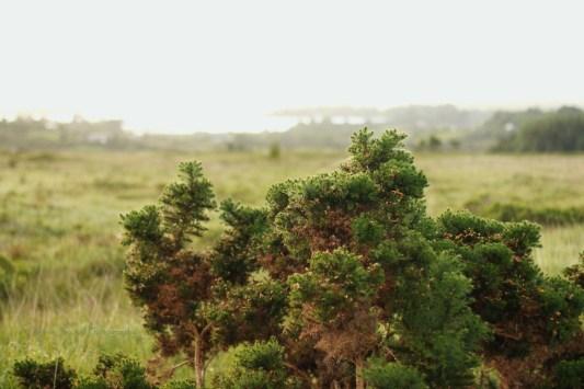 gorse landscape
