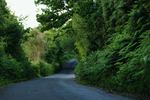 Irish summer roads