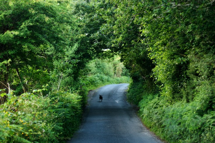 a dog walking on a road