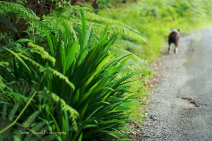green vegetation, dog in the distance