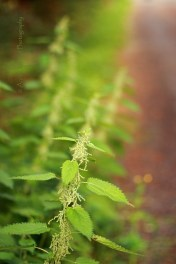 nettles by the side of the road