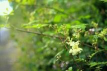 flowers, summer light, green nature