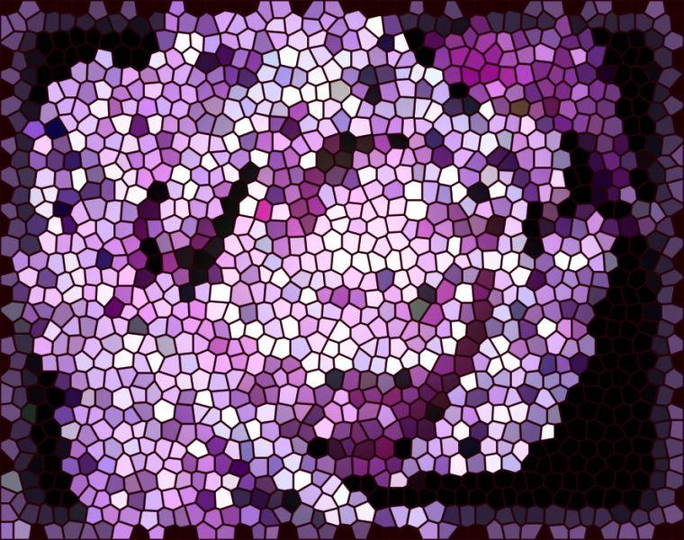rosemagentacrack.jpg
