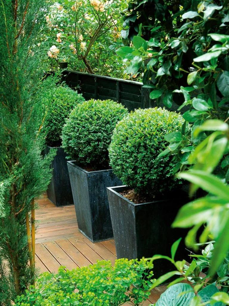 Large Flower Pots for Trees