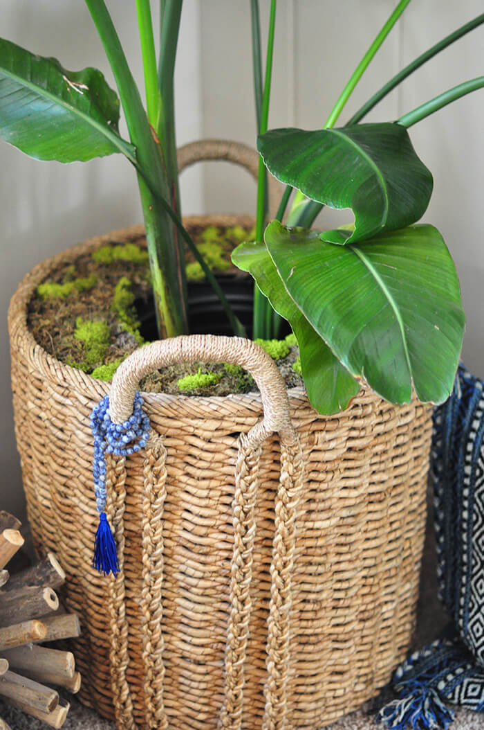 Wicker Pots with Leafy Plants