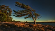 APC Windswept Pine_Anni Gabud