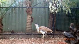 Featherdale Wildlife Park Doonside NSW 30 05 2016.24