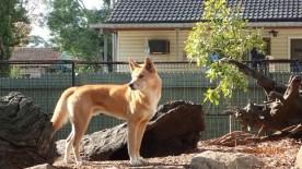 Featherdale Wildlife Park Doonside NSW 30 05 2016.27