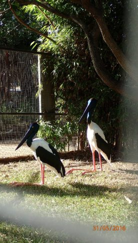 Featherdale Wildlife Park Doonside NSW 30 05 2016.40