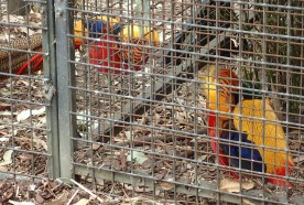 Featherdale Wildlife Park Doonside NSW 30 05 2016.8