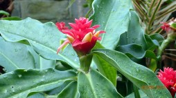 botanic-gar2ndaug1612