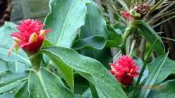 botanic-gar2ndaug1613