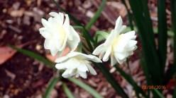 botanic-gar2ndaug164