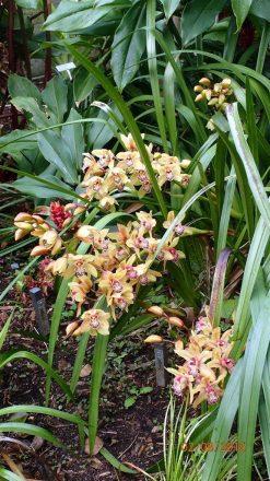 botanic-gar2ndaug169