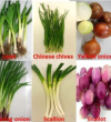 Potential role of leek, Allium porrum in attenuated cardiotoxicity effects of Trastuzumab